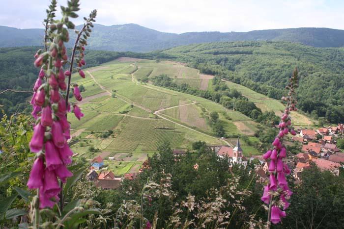 Vignes02